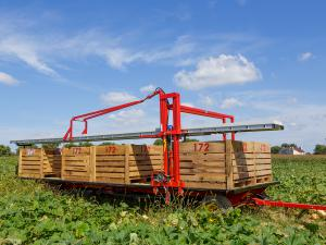 Harvest wagon equipped with totes.